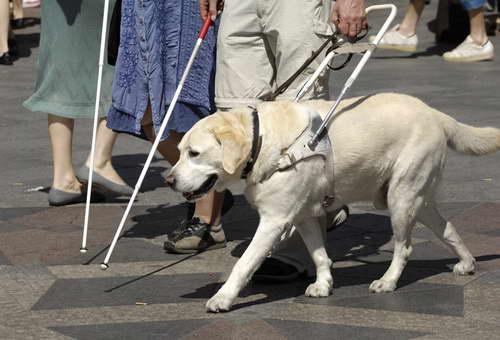 ВУфе слепого заставили приобрести билет наавтобус для собаки-поводыря